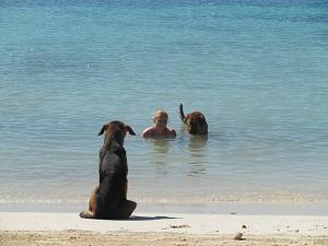 Zwemmen met honden, waar anders dan op Half Moon Bay, Jamaica