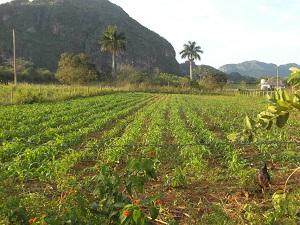Vinales Cuba10