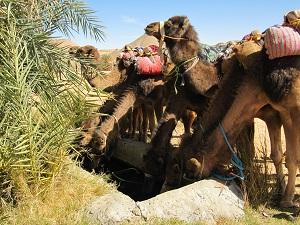 Eindelijk, de bron! Op dag vier drinken de kamelen zich vol en wij wassen onze haren. Dit is je kans om huppelende kamelen te zien, wat een leuk moment was dat!